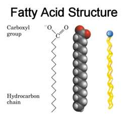 fatty-acid-structure1